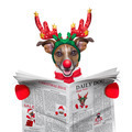 dog reading newspaper - PhotoDune Item for Sale