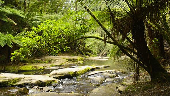 VideoHive Rainforest Stream 9697761