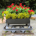 interesting flower bed in the trolley - PhotoDune Item for Sale