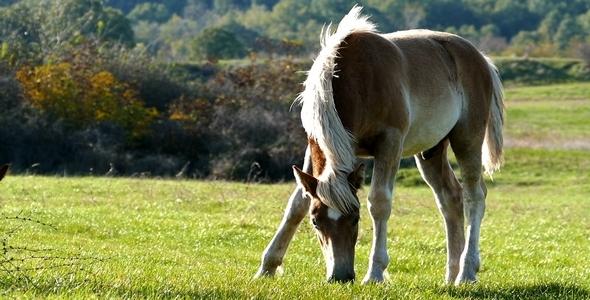 VideoHive Horses 2 9700918
