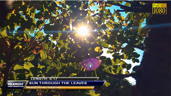 VideoHive Sun Through The Leaves 9702269