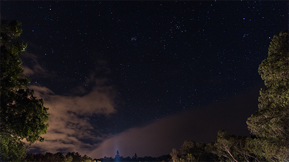 Stars Sky Forest
