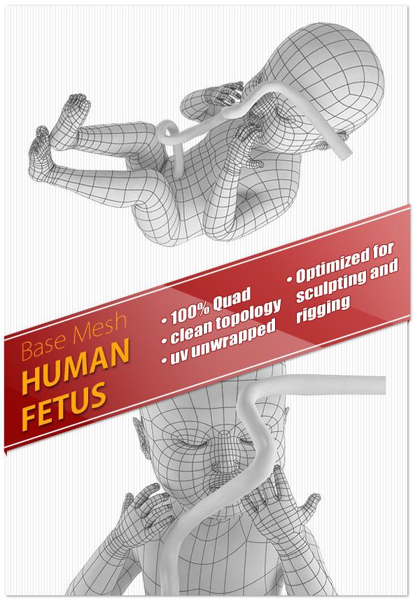 Human Fetus - 3DOcean Item for Sale