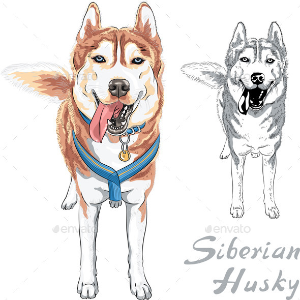 GraphicRiver Siberian Husky Breed 9705482
