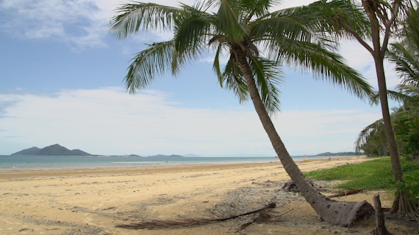 Mission Beach With Palm Tree And Dunk Island At The Background