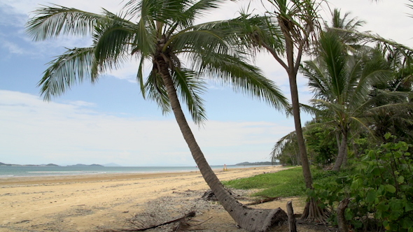 VideoHive Pan From Mission Beach With Palm Tree And Dunk Island At The Background 9706021