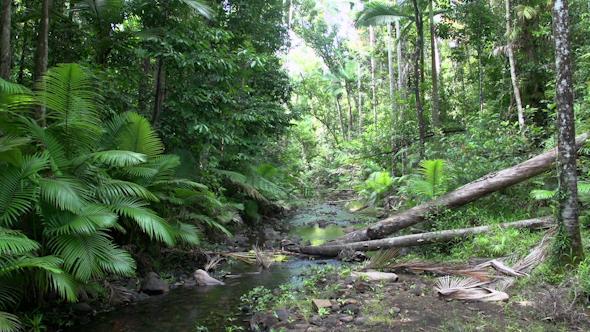 Rain Forest In Mission Beach In Queensland Australia