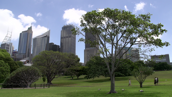 VideoHive People Walking Through The Botanic Gardens In Sydney 9706292
