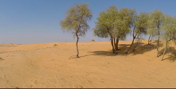 VideoHive Desert Camels 9708620