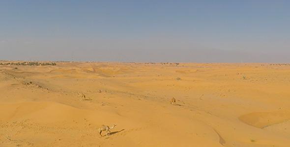 VideoHive Desert Camels 2 9708773