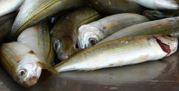 Fish Store 5