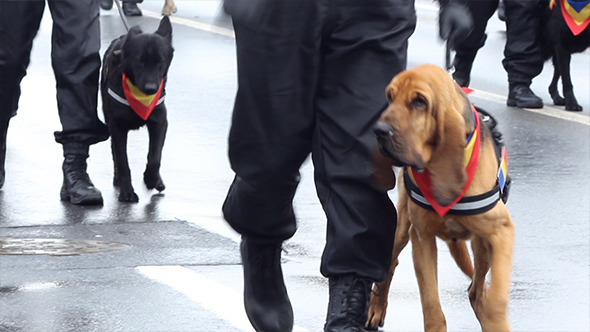 VideoHive Policemen with Dogs 9710260