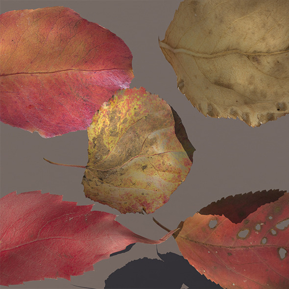 3DOcean Autumn Fall Leafs PACK Low Poly 3D Model 9711490