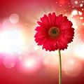 gerbera flower - PhotoDune Item for Sale
