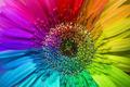 rainbow flower - PhotoDune Item for Sale