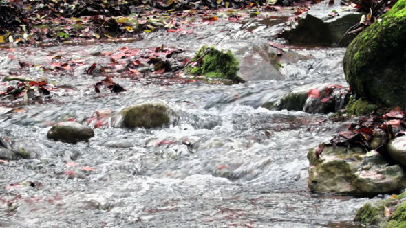VideoHive Mighty Creek in Autumn Panoramic View 9713313