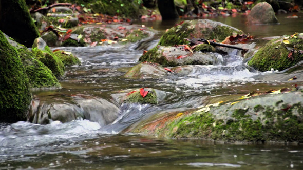 VideoHive Creek Cascade with Fallen Red Leaves in Fall 9713384