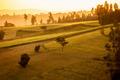 Ethiopian highlands at dawn