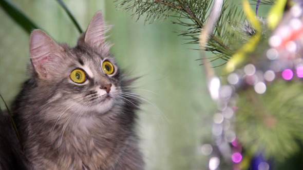 VideoHive Cat Near The Christmas Tree 4 9714776