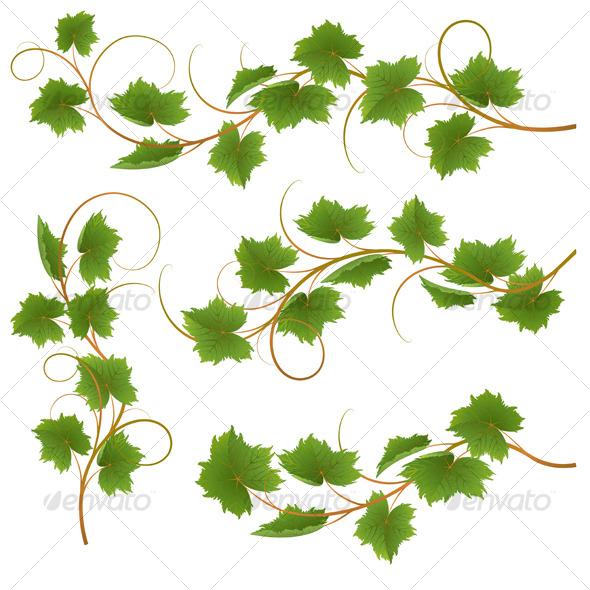 GraphicRiver Vine 123498