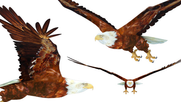 3D Flying Eagle 3 Views