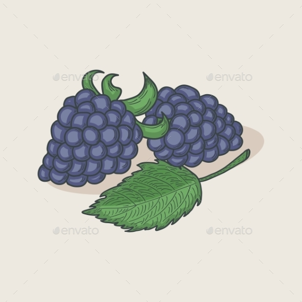 GraphicRiver Blackberries and Leaf 9716227