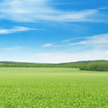 green field and blue sky - PhotoDune Item for Sale