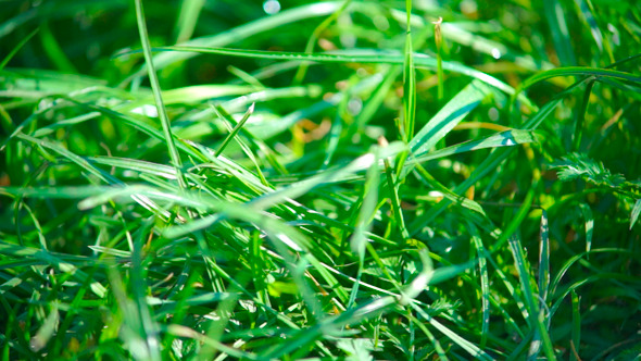 VideoHive Green Grass View 9720130