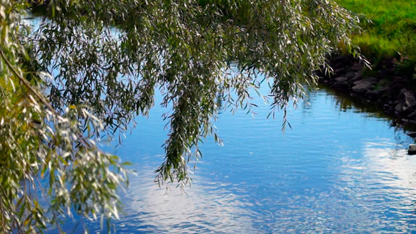 VideoHive Willow Near The River 9720143