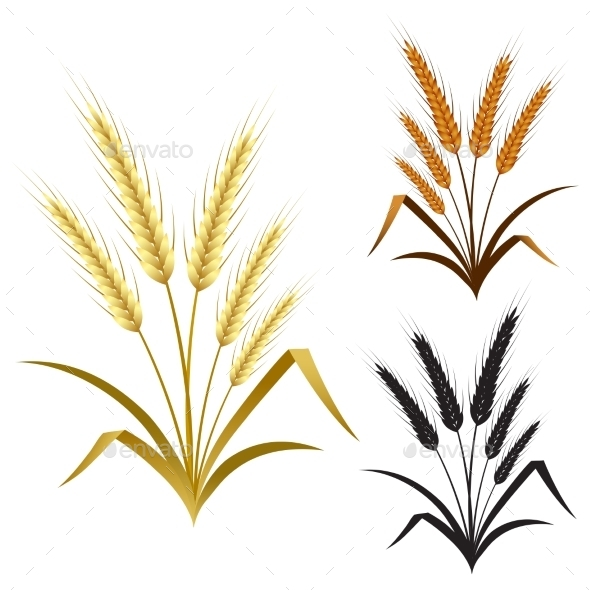 GraphicRiver Ears of Wheat Rye or Barley 9720183