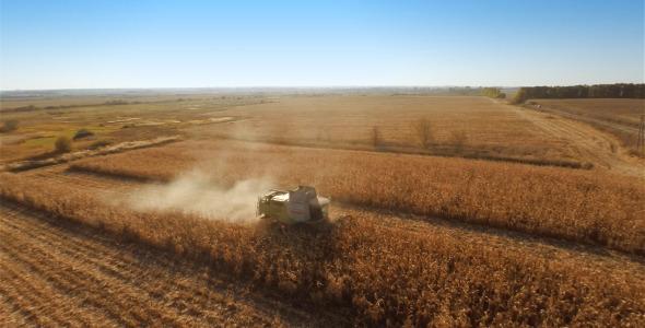 Harvesters Work on Cornfield 3