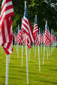Rows of American flags at the park on Memorial Day - PhotoDune Item for Sale
