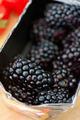 Fresh ripe blackberries - PhotoDune Item for Sale