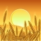 Background with Ripe Yellow Wheat Ears - GraphicRiver Item for Sale