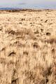 Lava Beds National Monument Rock Mounds Grassland Northern California - PhotoDune Item for Sale