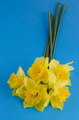 Jonquil flowers - PhotoDune Item for Sale