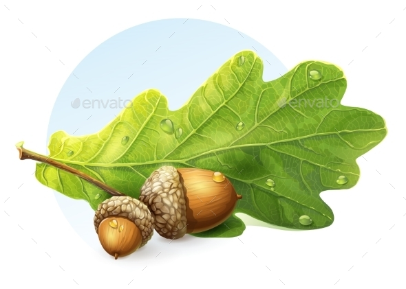 GraphicRiver Acorns 9738347