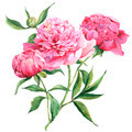 Pink watercolor peonies vintage greeting card  - PhotoDune Item for Sale