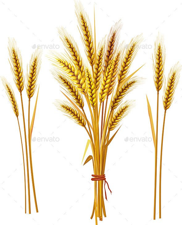 GraphicRiver Spike of Wheat 9738746