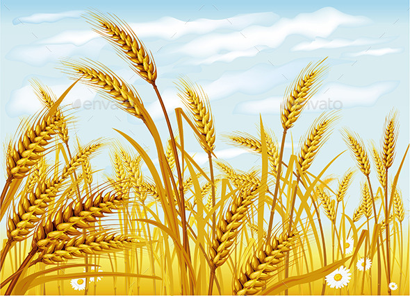 GraphicRiver Wheat in the Field 9738812