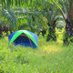 Tourist tent in palm plantation - PhotoDune Item for Sale