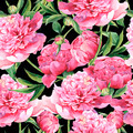Seamless vintage floral watercolor background with pink peonies - PhotoDune Item for Sale