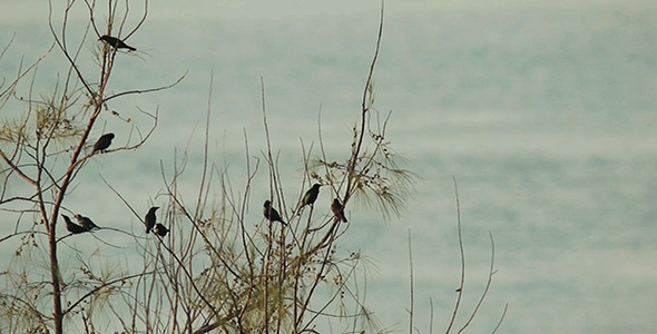 VideoHive Birds Preening by The Sea 9739396