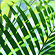Green Leaf In Nature 276 - VideoHive Item for Sale