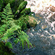 Ferns By River - VideoHive Item for Sale