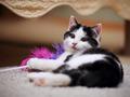 Small kitten - PhotoDune Item for Sale