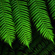 Green Fern leaf - PhotoDune Item for Sale
