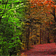 Forest Walkway Full HD Loop (3 in 1) - VideoHive Item for Sale