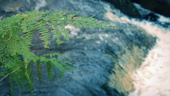 Fern Near River