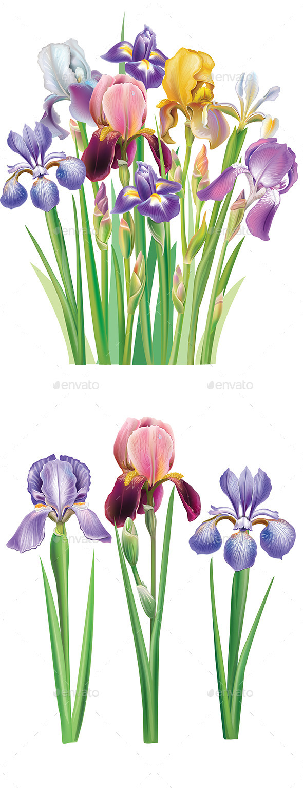 GraphicRiver Bouquet of Iris Flowers 9748832